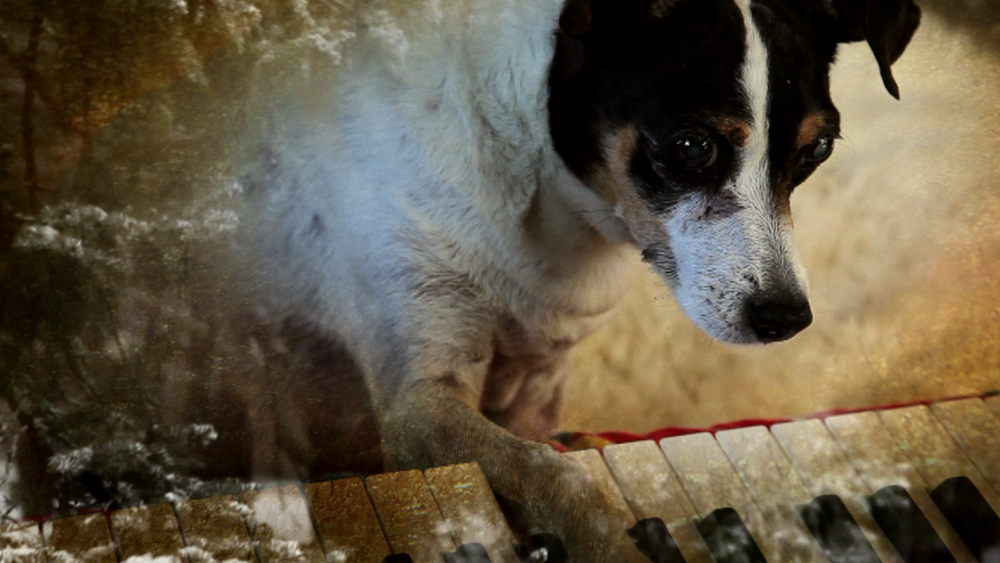 HEART OF A DOG, A NEW MOVIE EXPERIENCE BY THE EVER DARING AND GROUNDBREAKING LAURIE ANDERSON